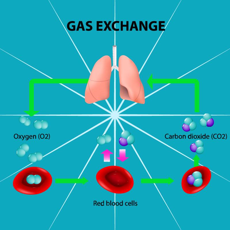 Hemoglobin and methemoglobin